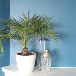plant-deco-blauwemuu