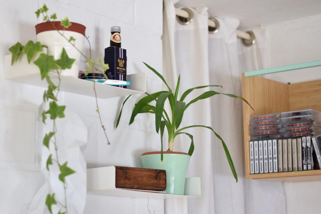 Crystal Die binnenkijker planten