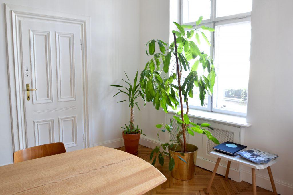 autor-rooms-warschau-interieur-hotel-planten