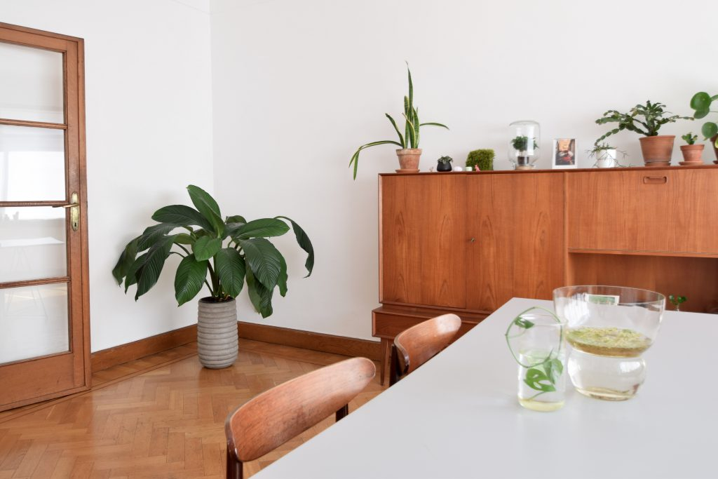 midcentury-modern-planten