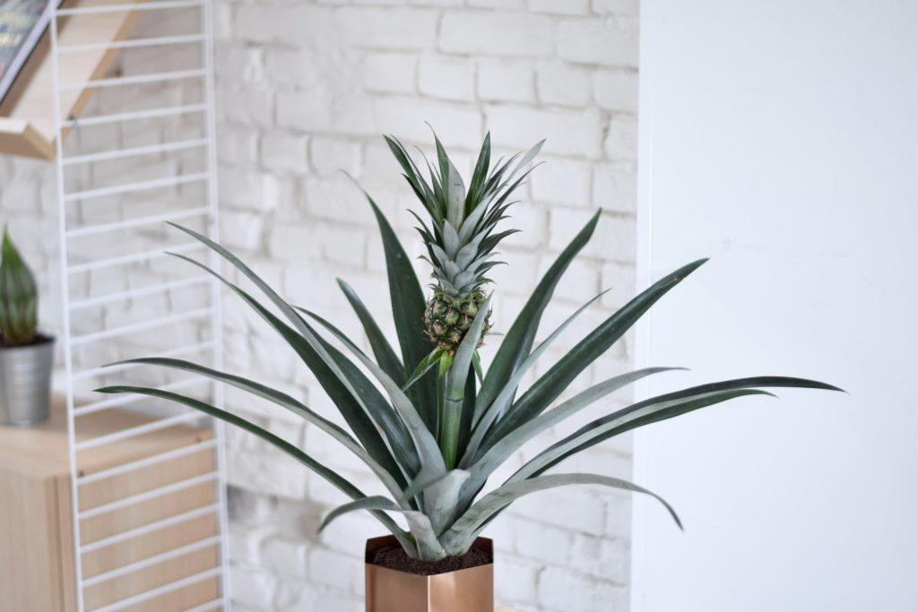 Jasmien Witvrouwen interieur plant