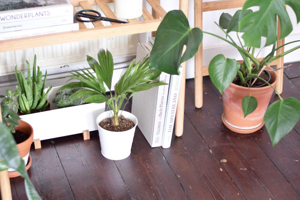 ikea socker potplant