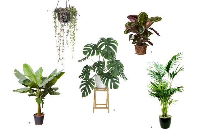 Pinterest perfecte planten Clo Clo
