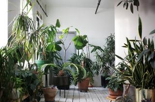 plant-jungle
